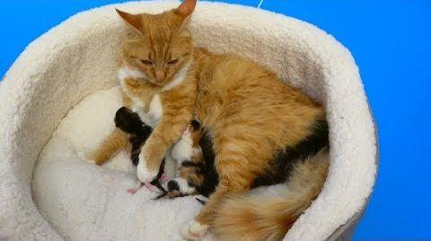 Видео Cat baby Shower / Сколько котят родила КОШЕЧКА Мурка ?