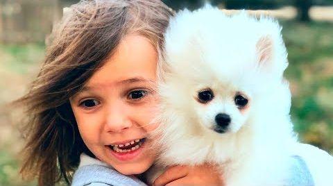 Видео Катя и Макс купили собачку
