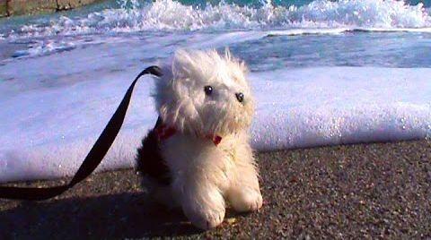 Видео Катя с собачкой на берегу Черного моря