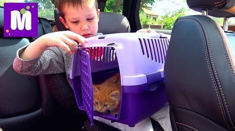 Видео Кошечка Мурка ведём котёнка к ветеринару в клинику для животных