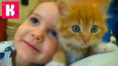 Видео Кошка Мурка питомец Кати и Макса / VLOG / Покупаем все необходимое для кошек