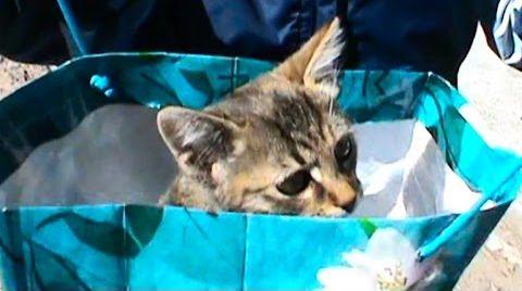Видео Кошки Котята веселое приключение котика