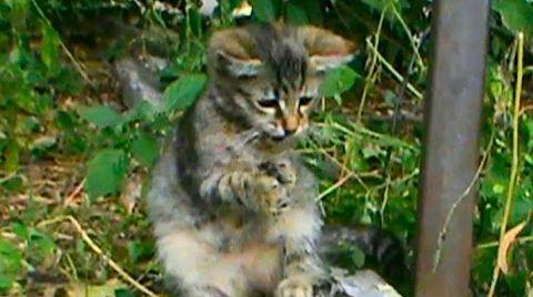 Видео Котята играют с детками