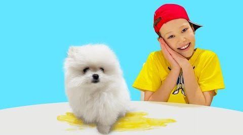 Видео Макс тренирует маленького щенка шпица