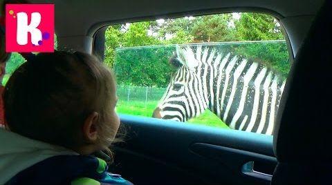 Видео Париж День #6/ едем в зоопарк Динозур/ сафари на машине