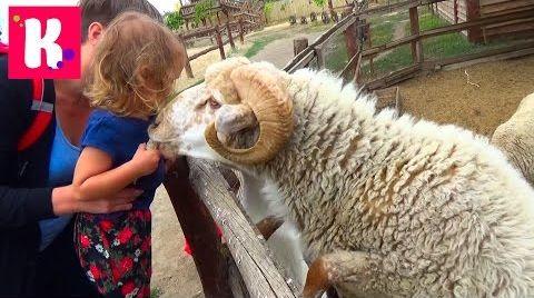 Видео Прогулка по Ранчо Дядюшки Бо / кормим домашних животных