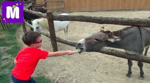 Видео Ранчо Дядюшки Бо гуляем и кормим домашних животных