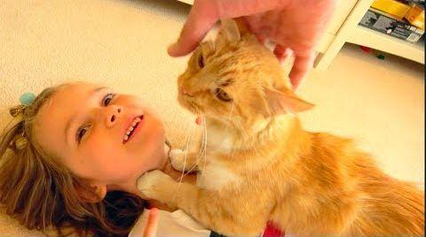 Видео Разбудили Макса и кошечка Мурка НЕ привела Котят