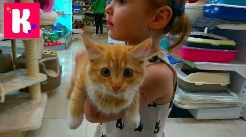 Видео VLOG Кошечка Мурка с Катей в салоне красоты, грюминг, подарки от магазина для животных